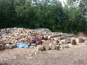 tree-cutting-nj-2